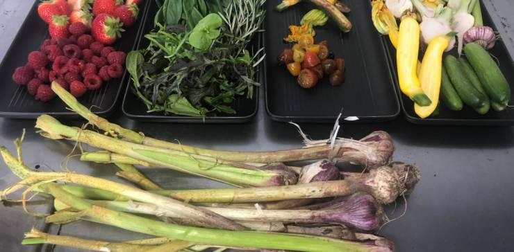 Pop-Up Community Harvest Lunch